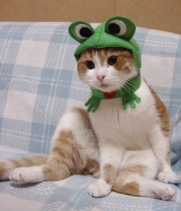 A cat dressed as a frog. You have a problem with that?
